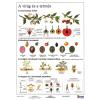 Stiefel Eurocart Kft. A virág és a termés   munkaoldal tanulói munkalap
