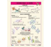 Stiefel tanulói munkalap, A4, Geometria -a szög tankönyv