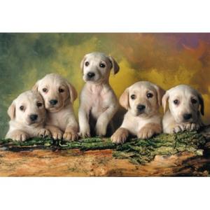 Educa Labrador kölykök 500 db-os puzzle
