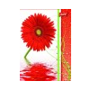 UNIPAP Flowers füzet