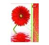 UNIPAP Flowers füzet füzet