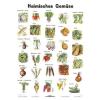 Stiefel Eurocart Kft. Heimische Gemüse