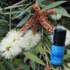 Farfalla - Niaouli, kbA, 10 ml 10