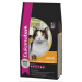 Eukanuba cat adult chicken & liver 2kg