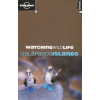Watching Wildlife: Galapagos Islands - Lonely Planet