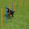 Zooplus Agility Fun & Sport - szlalom szett kutyáknak - 12 rúd, Ø 2,5 cm, hossza 100 cm