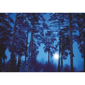Heye puzzle 500 db - Full Moon Magic Forest