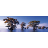 Heye puzzle 1000 db - Bald Cypresses, Edition Humboldt