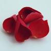Bolgár rózsavíz BIO - 50 ml