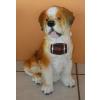 Kutya-Bernáthegyi-életmentő