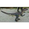 Dinoszaurusz - Allosaurus - kicsi, laminált