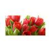 Tulipánok vászonkép