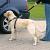 Trixie Biztonsági öv kutya l 70-90cm l