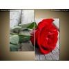 Balkys Trade Nyomtatott kép Gyönyörű rózsa a fapadlón 60x60cm 1113A_2A