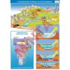 Comenius A vízszennyezés forrásai és következményei