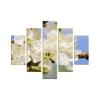 Cseresznyevirág vászonkép