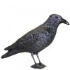 egyéb Galambriasztó varjú (Galambriasztó varjú)