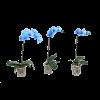 IBH PHALENOPSIS ROYAL BLUE CS:12 CM KÉK FESTETT PHALENOPSIS ORCHIDEA