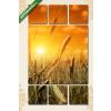 Képáruház.hu Napnyugta a búzaföldön(135x80 cm, W01 Többrészes Vászonkép)