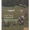 Mezőgazdasági A lipicai ló Magyarországon
