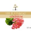 Naturpolc Naturpolc gerániumrózsa illóolaj 10 ml