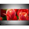 Odea.hu Cinóberpiros, vörös tulipán vászonkép 100x40 1 részes