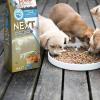 Panzi FitActive Next Hypoallergenic Classic Lamb Puppy (hal, bárány) száraztáp, 15kg