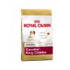 Royal Canin Cavalier King Charles Junior száraztáp 0,5 kg