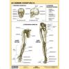 Stiefel Az emberi csontváz II. DUO