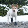 Trixie; Walker Kutyacipő Walker Active XsS 2db/Csomag