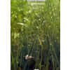 Wise Evergreens
