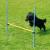 Zooplus Agility Fun & Sport ugróakadály kutyáknak - Teljes akadály szett